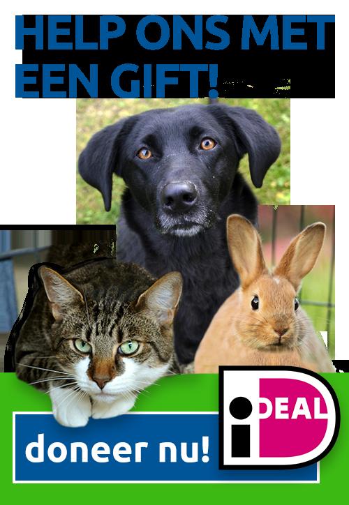 help-ons-met-een-gift-dierenasiel-almere-doneer