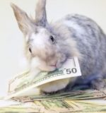 depositphotos_28362831-stock-video-rabbit-eating-dollar-bills-in
