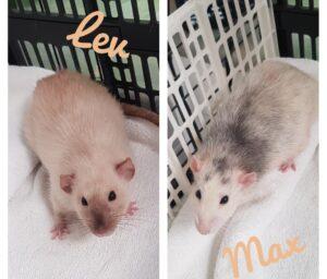 Max en Lev 1